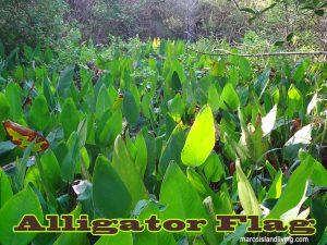 Florida Birding Trails