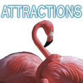 Attractions, Marco Attractions, Florida Attractions, Things to Do, Family Attractions, Marco Atraction Guide, Marco, FL