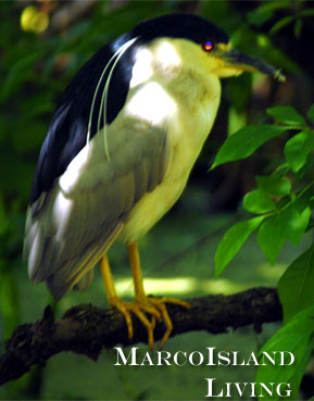 irding,Florida Bird Trails, Flamingos,Marco Island Birds, Marco Island Birding,FLorida Birds,Florida Birding