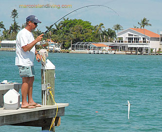 Everglades FL Nature Boat Tours