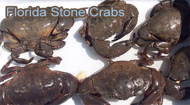 florida-stone-crabs