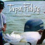 Tarpon fishing in the Florida Everglades.