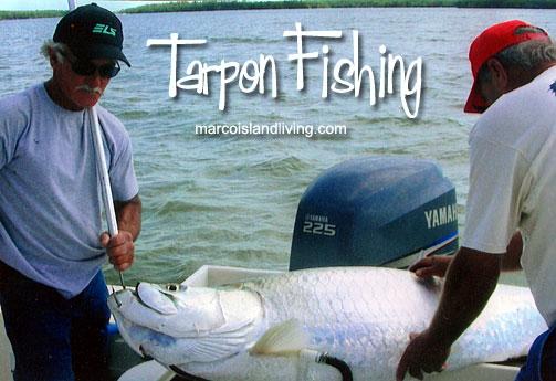 Tarpon fishing in the Florida Everglades.