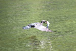 Everglades Wildlife Viewing Tours
