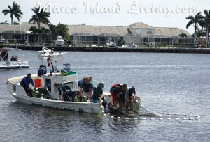FWC Manatee Rescue