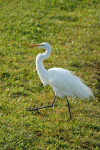 pic/bird crane
