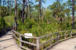 Corkscrew Swamp Sanctuary Boardwalk Birdwatching WIldlife Viewing
