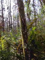 10,000 Islands Florida