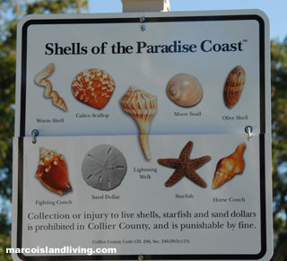 Marco Island Seashell Identification