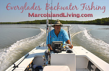 Fl everglades backwater fishing charters marco island for Everglades fishing guide