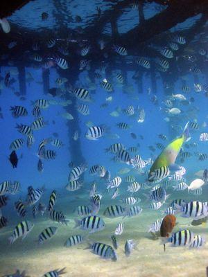Florida Scuba Diving Snorkeling Marco Island Living