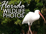 Florida Wildlife photos