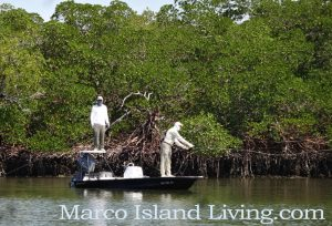 Fish the Everglades with a professional fishing charter. Find Fly-fishing to Backwater to Deep Sea Charters.