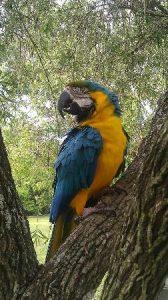 Parrot at Bird Gardens of Naples