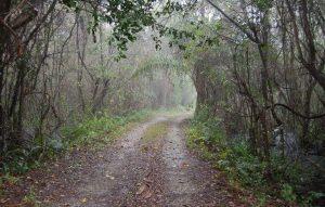 Fakahatchee Strand Preserve FL State Park Everglades