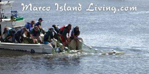 SW Florida Wildlife Rescue