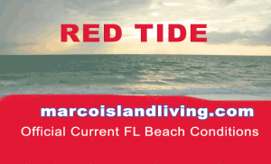FL Red Tide Beach Conditions Reports