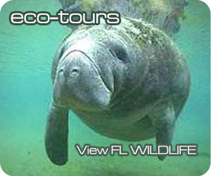 Everglades FL Eco Tours