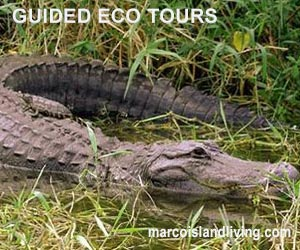 FL Eco Tours