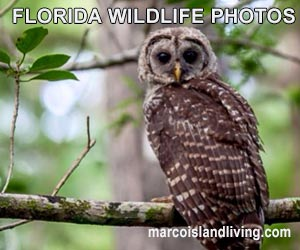 FL Wildlife Photos