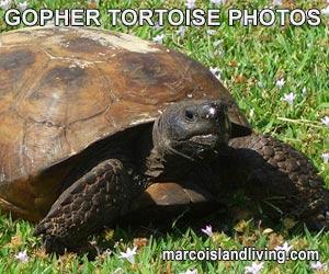 Gopher Tortoise Slideshow