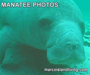 Manatee Photos